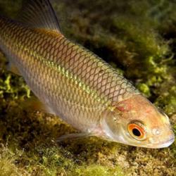 прикормка рыбы ранней весной