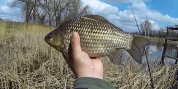 Рыбалка с удочкой на карася весной