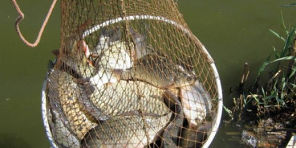 Фидерная оснастка для ловли на озере