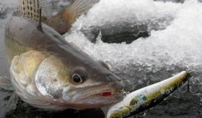 Миниатюра к статье Лучшие ратлины для судака: уникальная приманка для зимней рыбалки